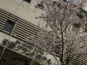 ☆ 安芸グラの桜も満開 ☆